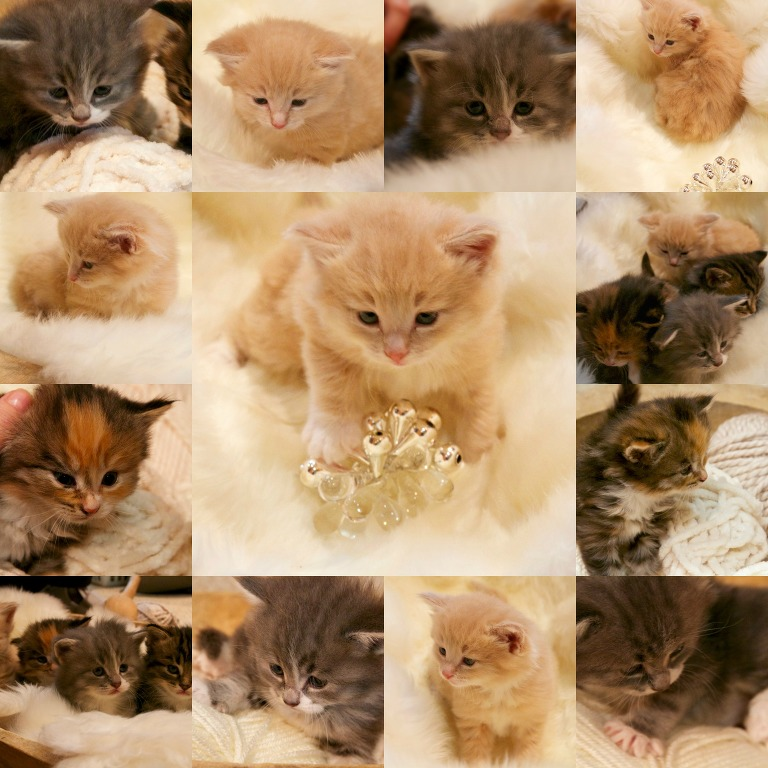 adorable collage of kittens