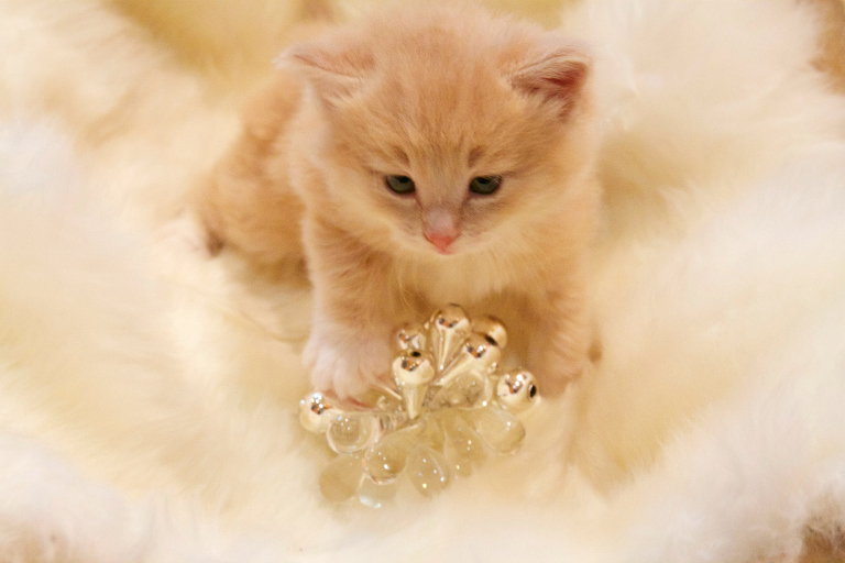 Christmas kitten with ornament